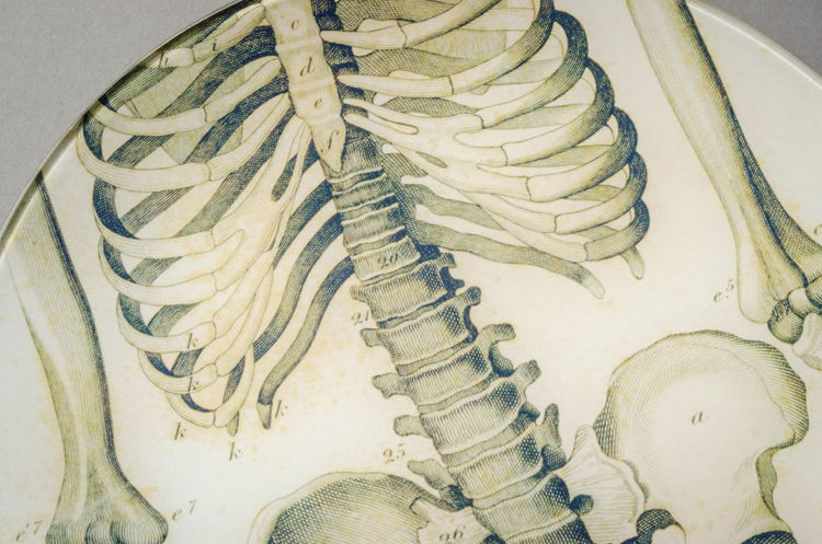 Picture of Torso of Skeleton