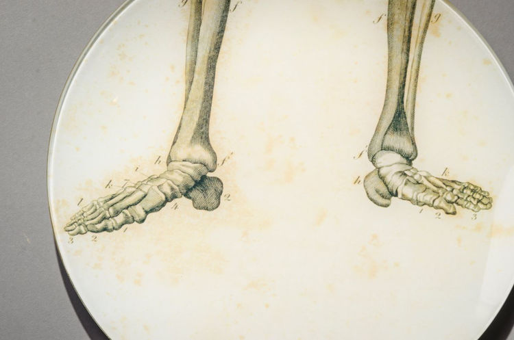 Picture of Feet of Skeleton