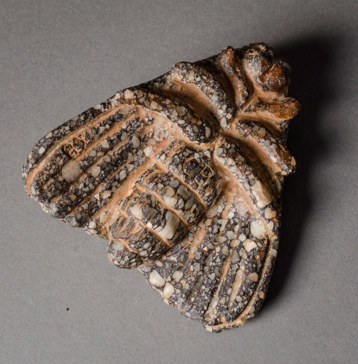 Picture of Medium Moth