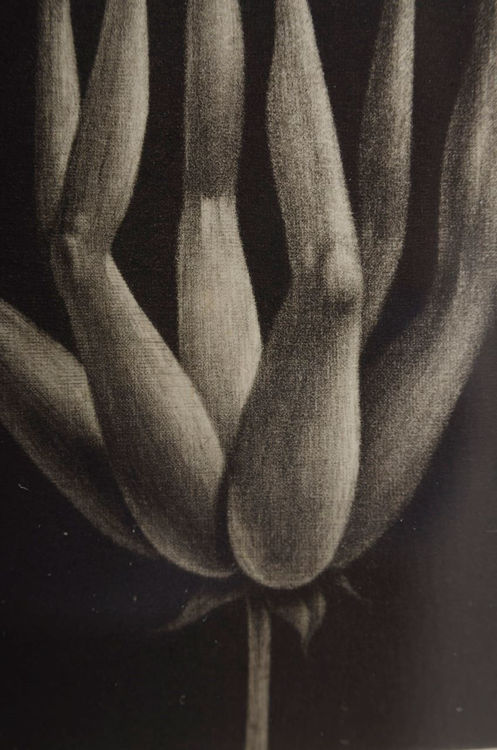 Picture of Flower of Legs